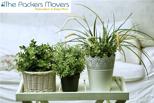 Plants Moving Tips, Packers and Movers in Bihar, Packers and Movers charges