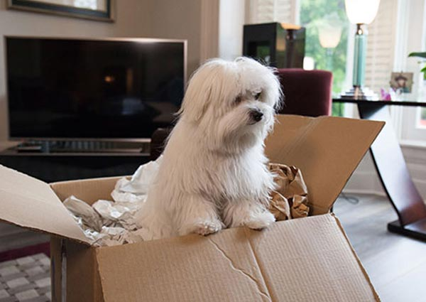 Keeping Your Pets Safe during Relocation