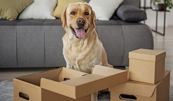 Pet Relocation in India